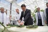 Воробьи едят огурцы и пообещал обеспечить регион овощами